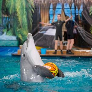 Дельфинарии, океанариумы Фирсановки