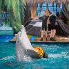 Дельфинарии, океанариумы в Фирсановке
